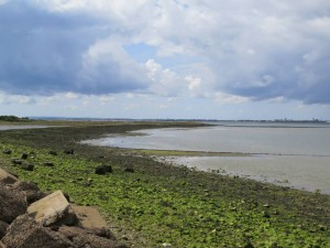 Remnants of the Hayling Oysterbeds