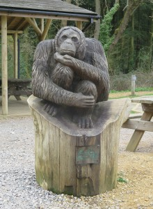 Go Ape - At least he looks like he would think about it