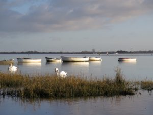 Swans at Emsworth Harbour
