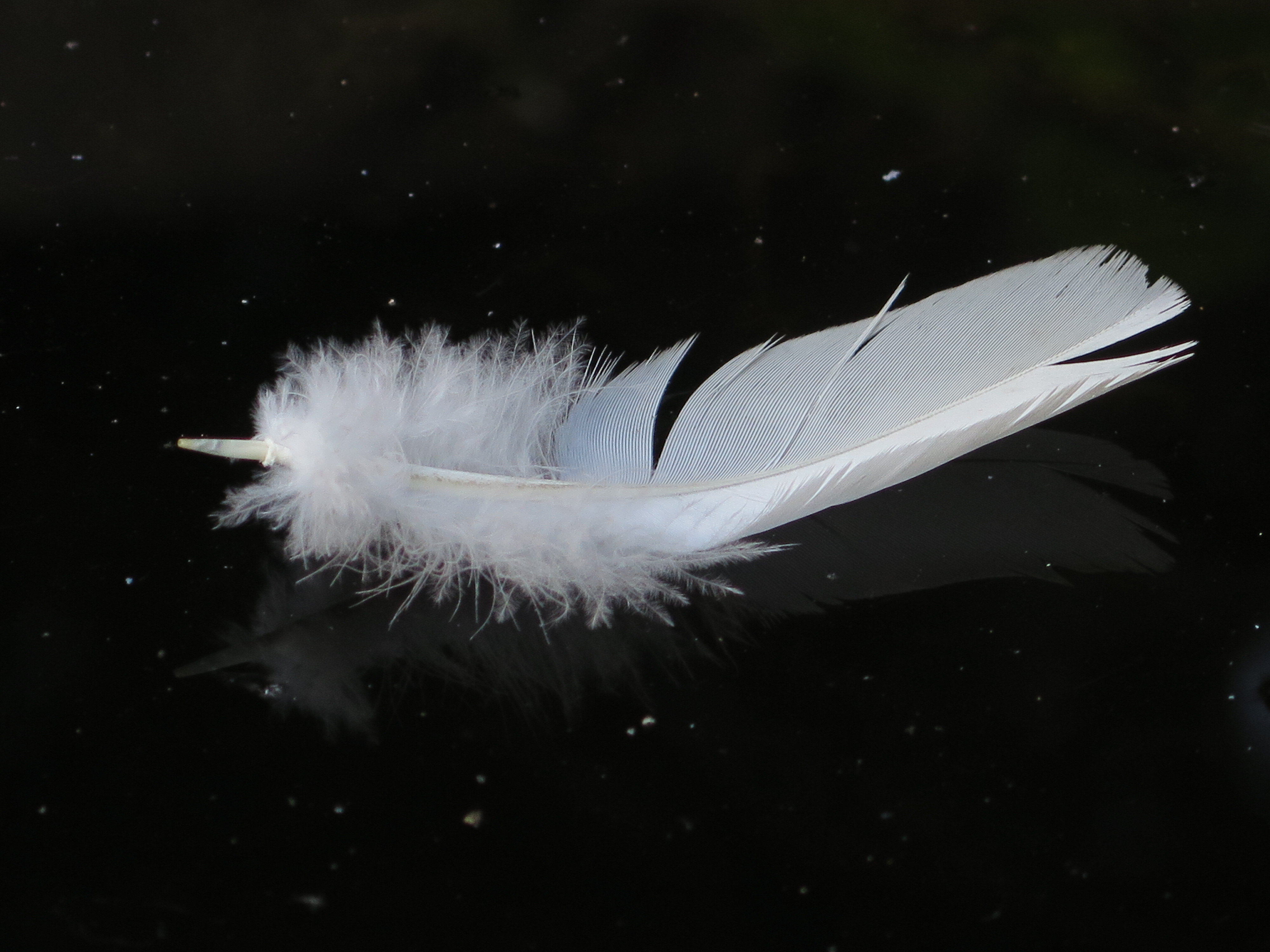 Light as a feather – 34/17